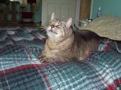 Mabel 1