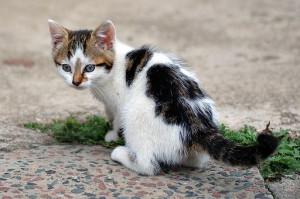 512px-Six_weeks_old_cat_(aka) Kitten books